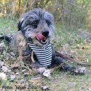 Freddylino kinderlieber Familienhund ca 4