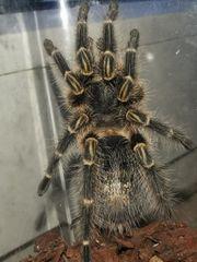 Ich vermittel diese Spinne
