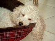 Hundebetreuung gesucht Dogsharing