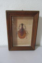 Seltenes Insekt