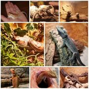 Aufnahme von Reptilien