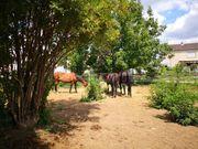 Für Pferdehaltung od Garten