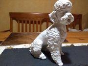 Kaiser Porzellan Figur biskuit Pudel