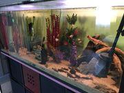 Aquarium 450lt