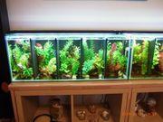 Aquarium Zucht-Becken 72 Liter sehr