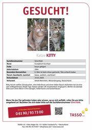Katze KITTY in 69469 Weinheim