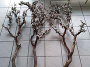 Kirschblütenast Kirschblüte Deko Äste Echtholz