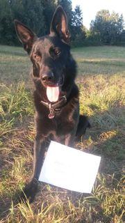 Blackjack sucht Tagesbetreuung Hundesitter