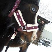 Reitbeteiligung für Welsh a Pony
