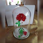 Disney - Rose aus Die Schöne