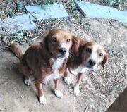 Bobby und Fritz