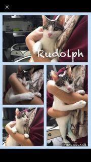 Kater Rudolph ca 9 Monate