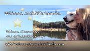 Weisse Schäferhund Welpen Langhaar mit