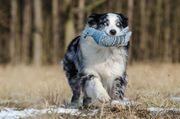 Professionelle Hundetagesbetreuung in Gerlingen