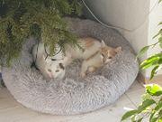 Karlie und Kitty suchen ein