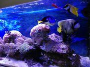 Salzwasser Meerwasser Aquarium