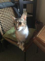 suche ein KätzchenSchwesterchen