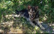 Straßenhund Sole sucht dringend ein