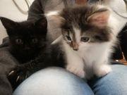 Kitten in gute Hände abzugeben