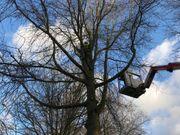 Professioneller Baum-Kronenschnitt mit Seilklettertechnik