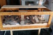 großer Holzkäfig 70x140