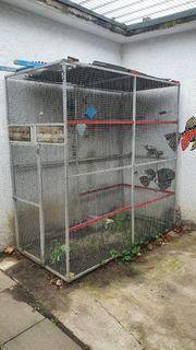 Ehemalige Grau Papagei Voliere aus