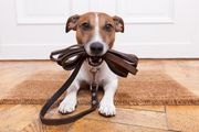 Hundesitter gesucht Raum Zwingenberg