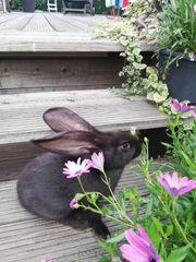 Junge Kaninchen zahm und gesund