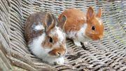 Süße kleine Kaninchen Brüderchen suchen