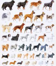 ich suche ein Hund