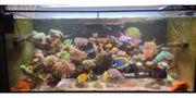 Meerwasseraquarium komplett mit Zubehör und