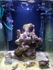 Meerwasseraquarium Aqua Illumination Wlan Lampe