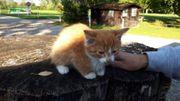 Kätzchen zugelaufen am Golfplatz in