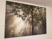 Bild Leinwand Ikea Wald mit