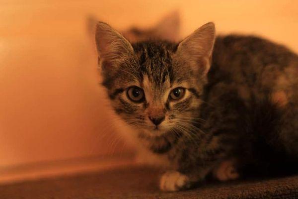 Iris Katze aus dem Tierschutz