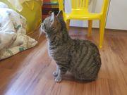 2 jährige bildhübsche Katze sucht