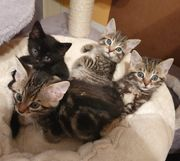 Katzenmädchen Katzenkinder suchen paarweise ihr