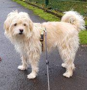 Zoe Mischlings Hund