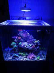 meerwasseraquarium Auflösung lebendgestein noch da