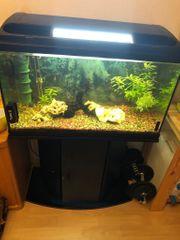 Aquarium mit Unterschrank und Besatz