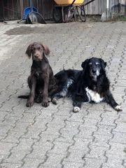 Hundepension auf Aussiedlerhof