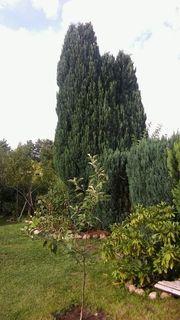 Heckenschnitt Sträucher trimmen Gartenhilfe Gartenarbeit