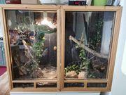 Kornnatter amelanistisch und Langnasennatter grün