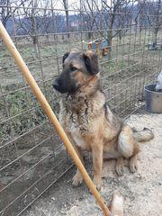 Junge Hundedame FRANKA