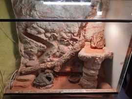 Voll Ausgestattetes Terrarium mit 2 Leopardgecko weibchen