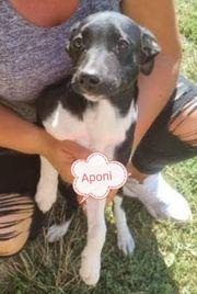 APONI - süsses Hundemädchen sucht ihr