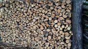 Trockenes Ofenfertiges Brennholz Kiefern in