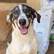 ZAMBI - liebes Hundekind - öffnest du