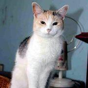 Katzenmädchen Betty sucht ihr Körbchen
