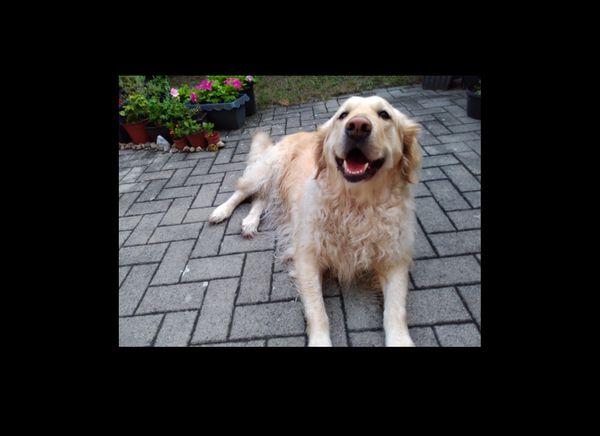 BIETE freundliche Hundebetreuung